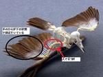 鳥からのピッチングイメージ.jpg